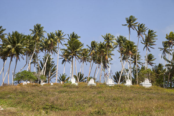Picture of Laura (Marshall Islands): Palm trees towering high above graves at Laura