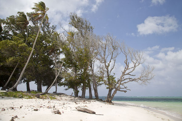 Picture of Laura (Marshall Islands): Beach of Laura with trees