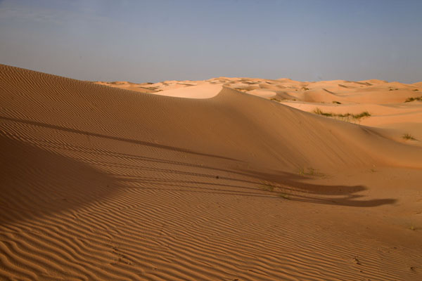 Shadows of the camels on a sand dune | Adrar Sahara camel trek | Mauritania