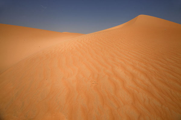 Orange sand dunes contrasting with the blue sky | Caminata camello Adrar Sahara | Mauritania