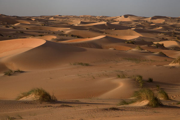 A sea of sand dunes in the Adrar desert | Caminata camello Adrar Sahara | Mauritania