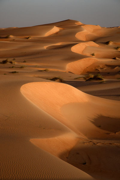 Picture of Late afternoon view of a range of sand dunes in the Adrar desert