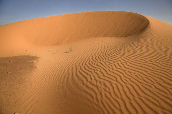 Looking up one of the many sand dunes in the desert | Adrar Sahara camel trek | Mauritania
