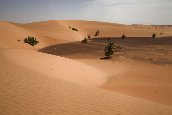 Sand dunes surrounding an area with black gravel | Caminata camello Adrar Sahara | Mauritania
