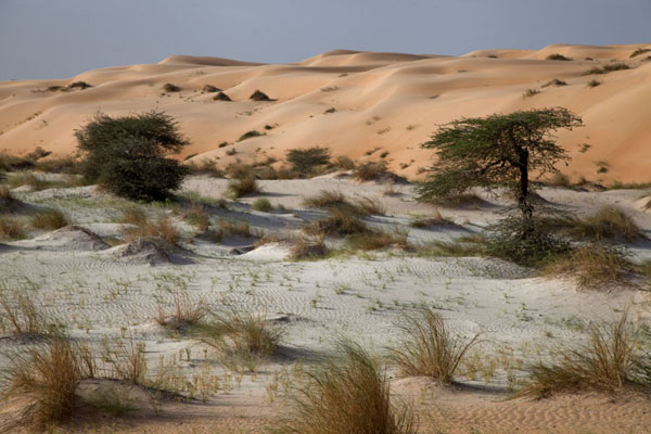 White sand with trees surrounded by orange sand dunes | Adrar Sahara camel trek | Mauritania