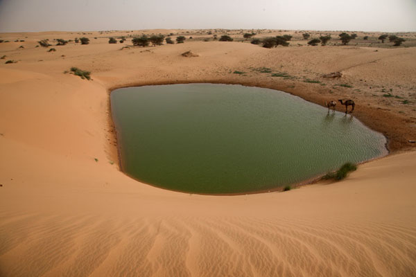 Photo de Camels drinking water from a pool in the desert - Mauritanie - Afrique