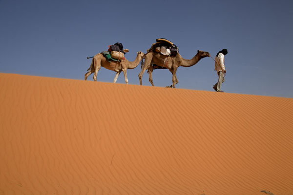 Photo de Camel driver leading camels over a sand duneAdrar - Mauritanie