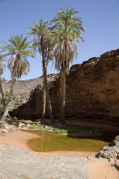 Palm trees and a small pool at the oasis of Terjit | Terjit | Mauritania