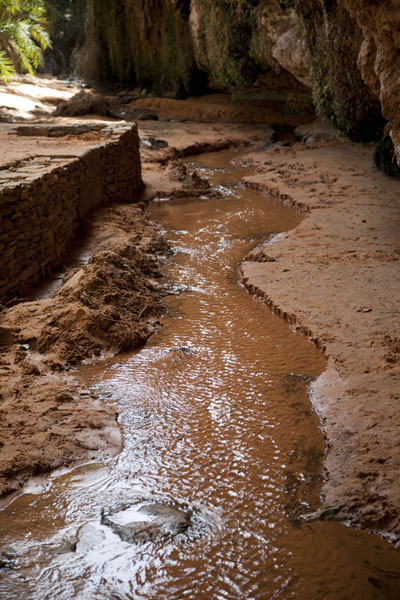 Small stream running down the oasis of Terjit | Terjit | Mauritania