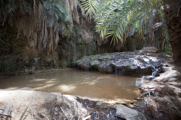 Picture of The small pool of Terjit in the oasis, surrounded by date palms