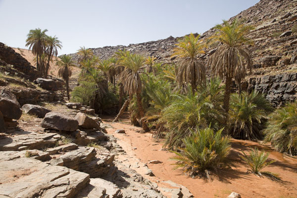 Foto di Mauritania (The oasis of Terjit with palm trees)