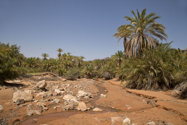 Small stream flowing over the sand in date palm tree landscape | Terjit | Mauritania