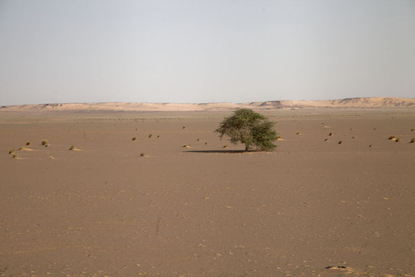 Foto de Sand dunes in the distance, and lone tree in the foreground, seen from the train - Mauritania - Africa