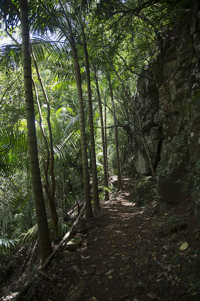 Trail through the forest of Eureka | Eureka | Mauritius