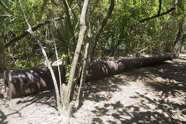 Picture of British cannon lying on the ground of the islandIle aux Aigrettes - Mauritius