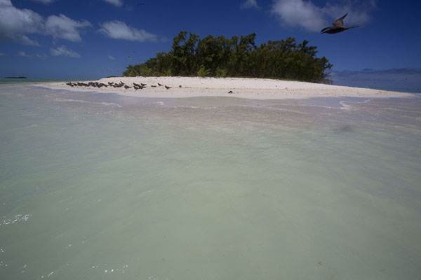 Foto van The northern tip of Ile aux Cocos rising from the turquoise watersIle aux Cocos - Mauritius