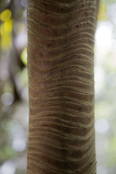 Close-up of one of the trees in the Grande Montagne reserve | Reserve Grande Montagne | Mauritius