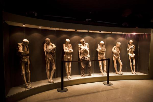 Row of mummies on display in the museum | Mummies Museum | Mexico