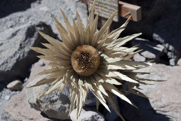 Picture of Dried flower in front of cross for perished climberNevado de Toluca - Mexico