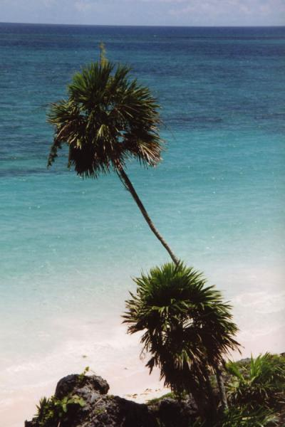 Palm overlooking the ocean | Playa del Carmen | Mexico
