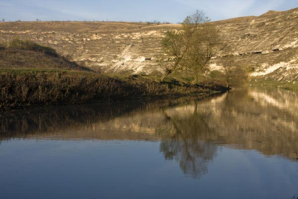 Picture of Tree reflected in Raut riverButuceni - Moldova