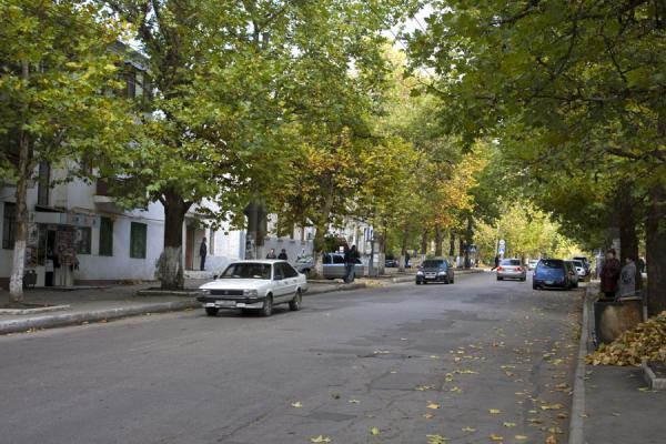 Picture of One of the many leafy streets of Tiraspol - Moldova - Europe