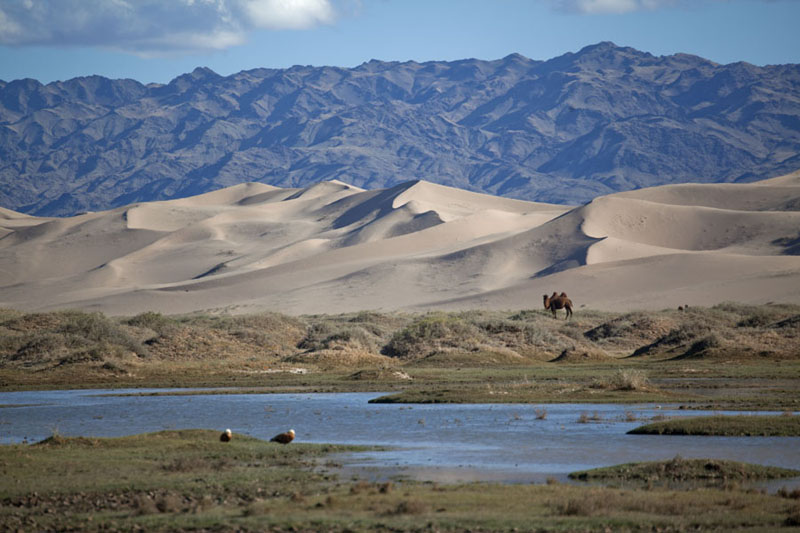 Foto van Camel and birds near the water with the sand dunes and mountains in the backkgroundKhongoryn Els - Mongolië
