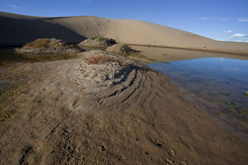 Photo de Pond protected by a sand dune at Khongoryn ElsKhongoryn Els - Mongolie