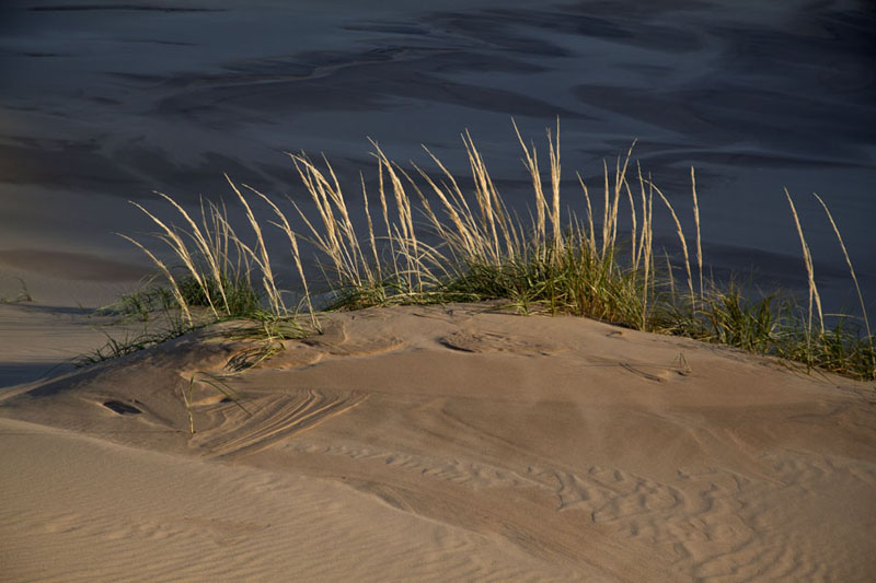 Grass growing on the sand contrasting with the shadow behind it | Khongoryn Els | Mongolia