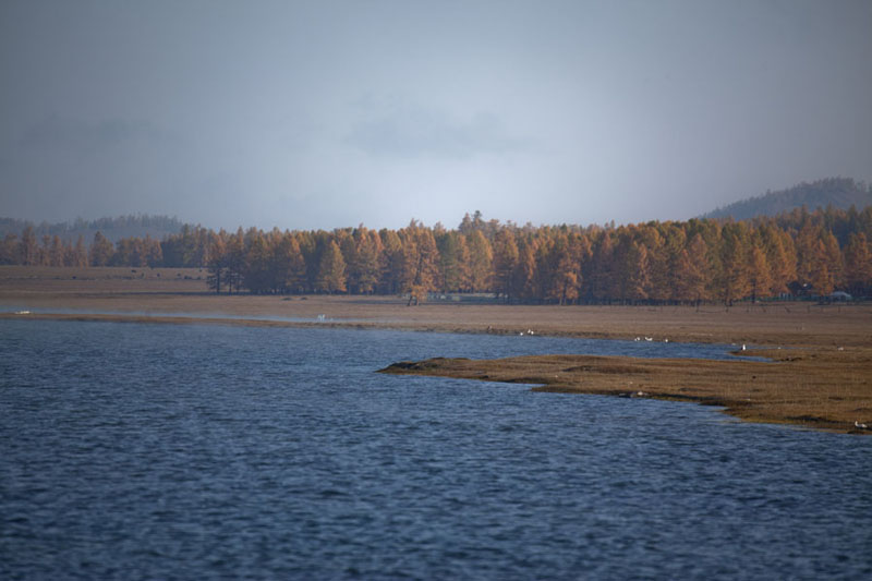 Picture of Shoreline of Khövsgöl Nuur with autumn colour treesKhövsgöl Nuur - Mongolia