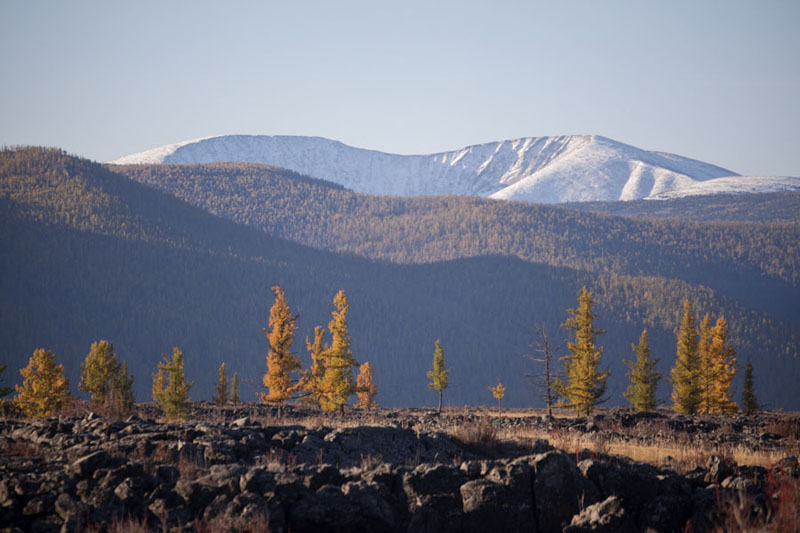 Snow-capped mountain and trees in autumn colours | Valle Orkhon | Mongolia