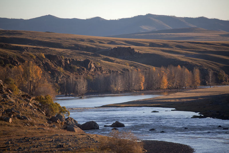 Orkhon river lined with trees in the early morning | Valle Orkhon | Mongolia