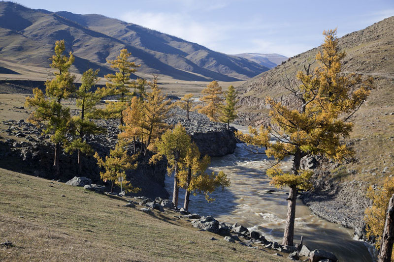 Trees lining the river at the rapids just above Orkhon waterfall | Valle Orkhon | Mongolia