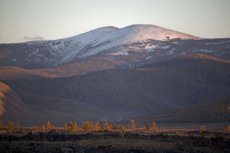 Trees in autumn colours with snow-capped mountain in the background | Valle Orkhon | Mongolia