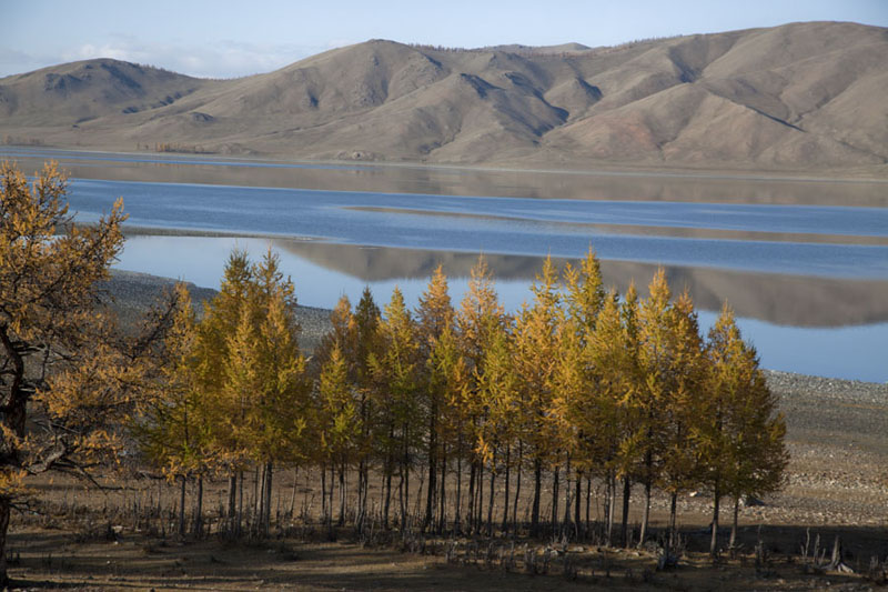 Row of trees and mirroring Zuum Nuur in the background | Zuum Nuur | Mongolia