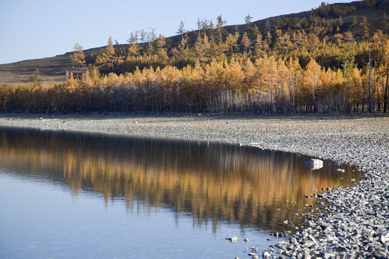 Beach with trees reflected in the mirror lake surface of Zuum Nuur | Zuum Nuur | Mongolia