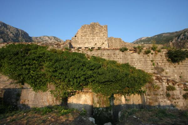 Foto van Overgrown walls of the fortress right on top of the hillKotor - Montenegro