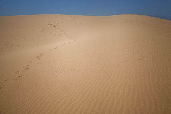 Foto van Desert feel on a major sand dune at the southern tip of Bazaruto Island - Mozambique - Afrika