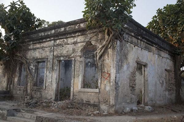 Trees growing on the walls of this ruined house in Ibo | Ibo | Mozambique