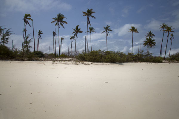 Foto de Mozambique (Palmtrees towering high above a white beach on Matemo island)