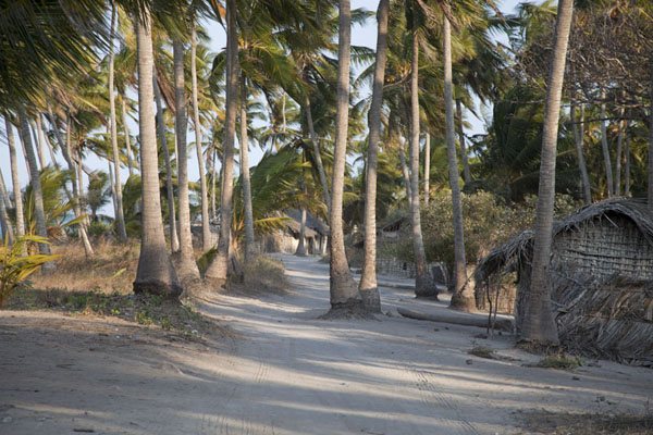 Sandy path through village with palmtrees | Matemo Island | Mozambique