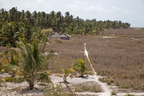 Trail outside the palm tree forest | Matemo Island | Mozambique