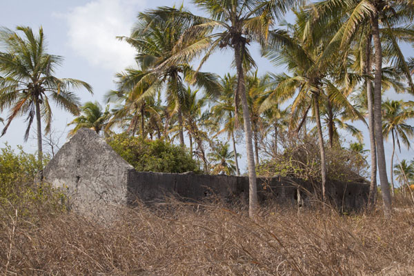 Ruins of old house dubbed Vasco da Gama house by locals | Matemo Island | Mozambique