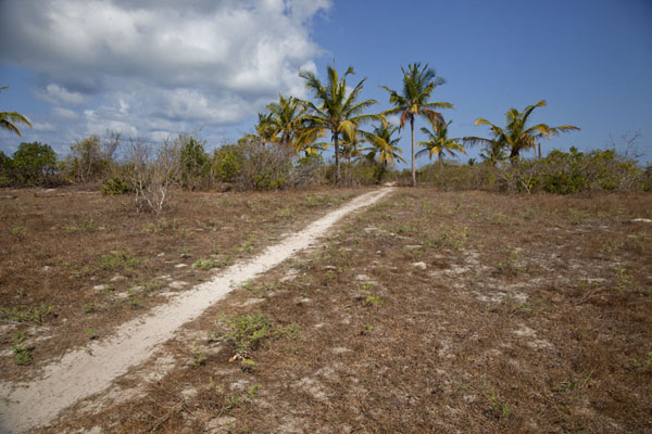 Picture of Part of the trail from Ibo to Mujaca