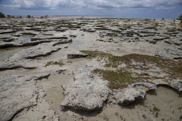 Picture of Much of the ground of Ibo exposed at low tide