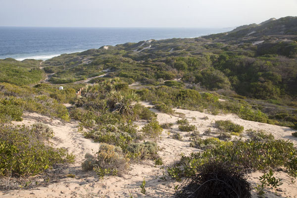 Foto di Looking out over the sand dunes near TofoTofo - Mozambico
