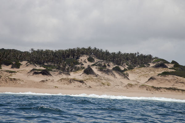 Sand dunes covered by palmtrees near Tofo | Tofo Coastline | Mozambique