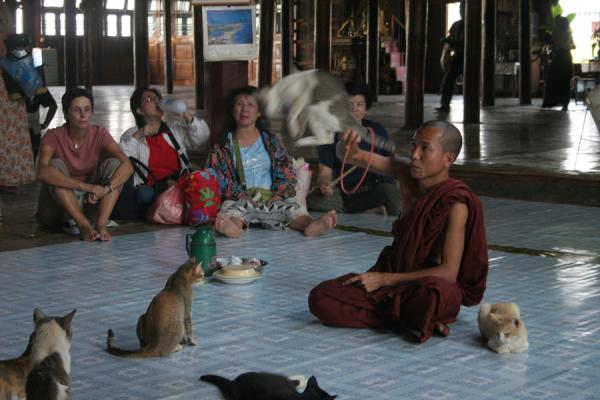 Monk in Jumping Cat Monastery letting a cat jump through a hoop | Inle Lake | Myanmar (Birmanie)