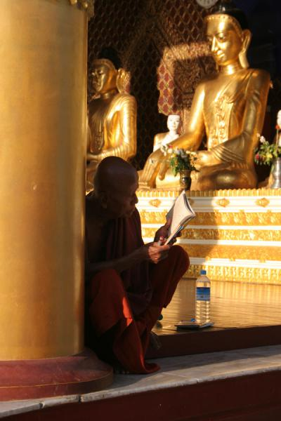Picture of Buddhist monk reading at the Schwedagon Pagoda in Yangon