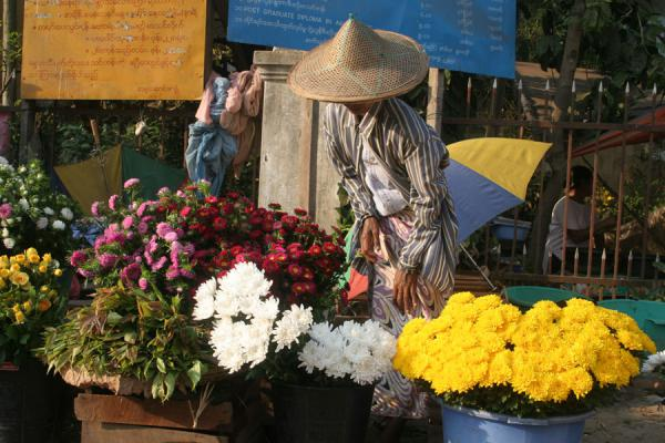 Woman selling flowers in the streets of Pathein | Pathein | Myanmar (Burma)